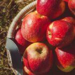 Ein großer Korb voll mit roten Äpfeln